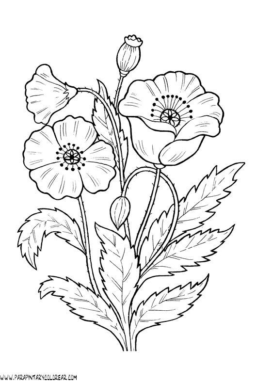 dibujos-para-colorear-de-flores-amapolas-011.gif