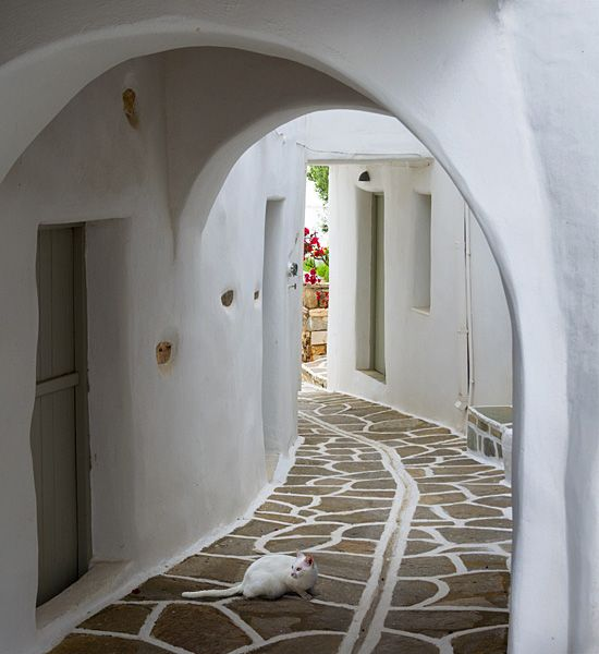 White cat under the arch
