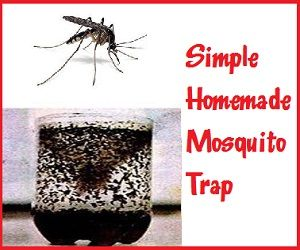 Skip the chemicals and the added cost of expensive mosquito traps this