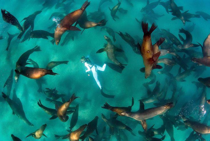 アシカハーレム!好奇心旺盛のアシカの大群に四方から囲まれながら泳げる、メキシコのサンタ・マルガリータ島