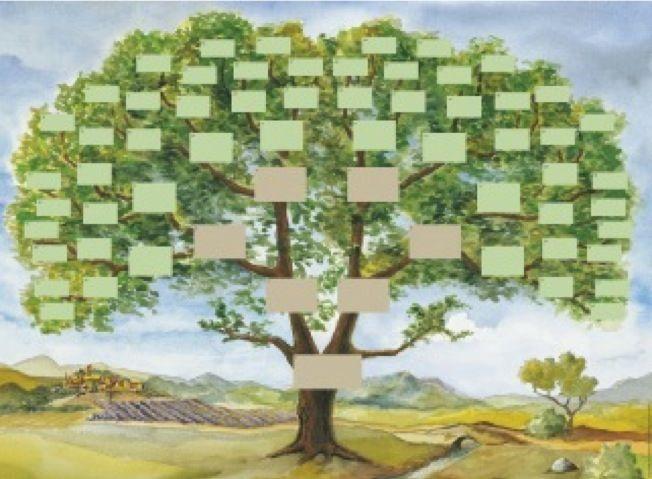 17 meilleures id es propos de arbre g n alogique vierge - Idee arbre genealogique original ...