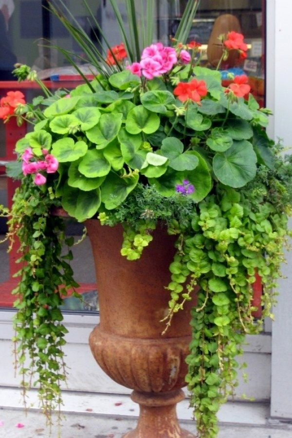Awesome DIY Container Garden Ideas you might try for your outdoor
