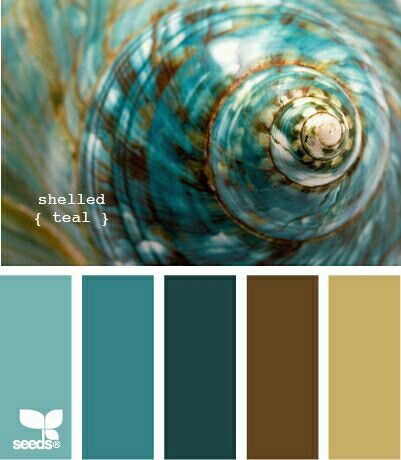 Shelled teal color palette