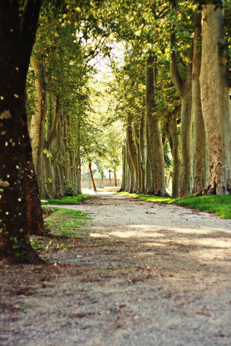 soreze abbaye ecole parc