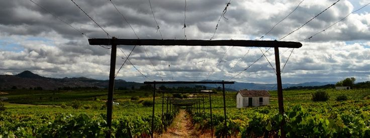 de-5-mooiste-wijnbars-van-europa
