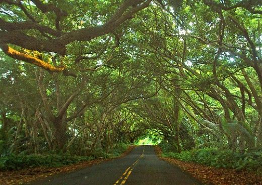 Hidden Hawaii: The Enchanted Red Road along Puna Coast on the Big Island