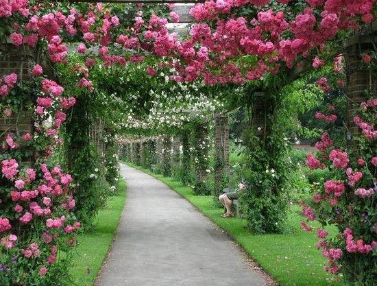 Садовые арки из цветов фото