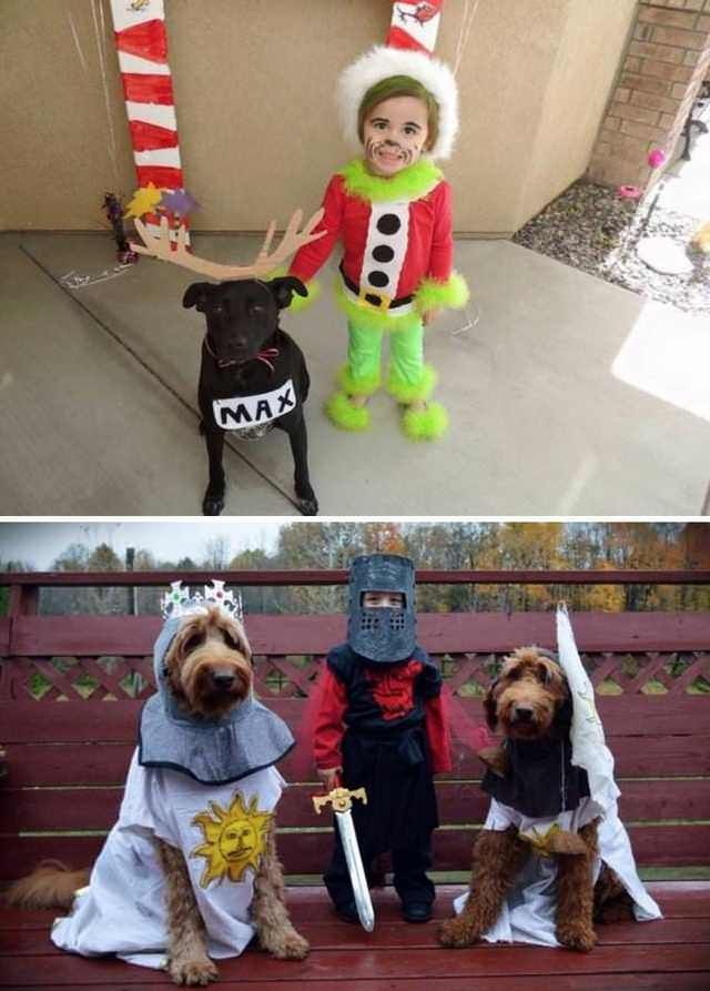 Imgur Post Imgur Duo Halloween Costumes Dog Costumes Dogs