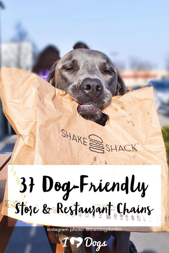 37 Dog-Friendly Store And Restaurant Chains | Stuff We Love | Dog