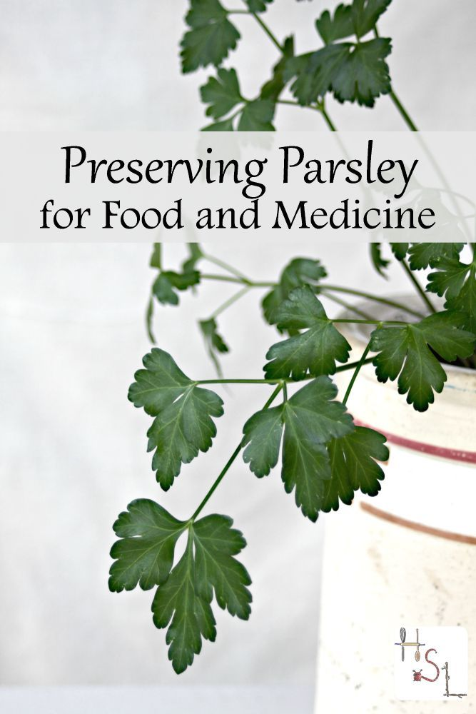 Parsley is full of nutritional and medicinal value, make the most of it by preserving parsley for food and medicine with these tips.