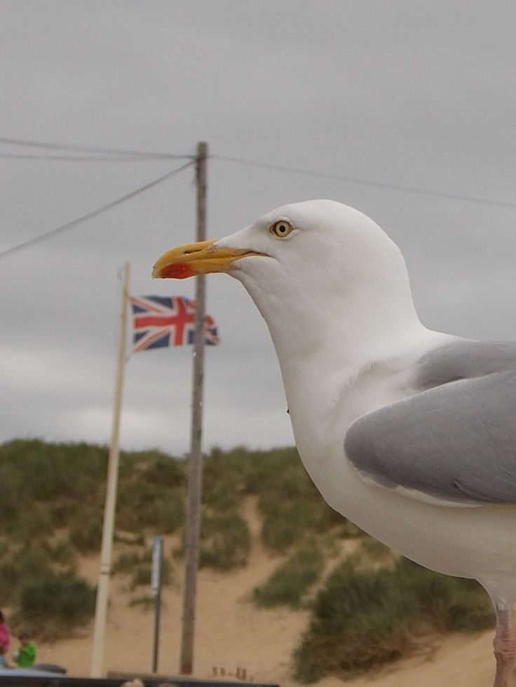 Seagull at Camber Sands, East Sussex, UK by B Lowe