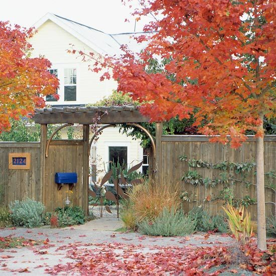 Frame your front entry to really show it off. Here, a pair of maples highlights a pergola-covered walkway.
