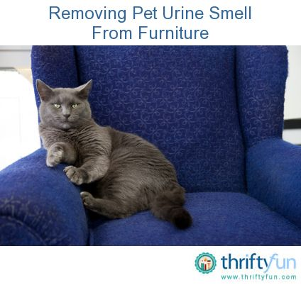 Elegant Removing Pet Urine Smell From Furniture