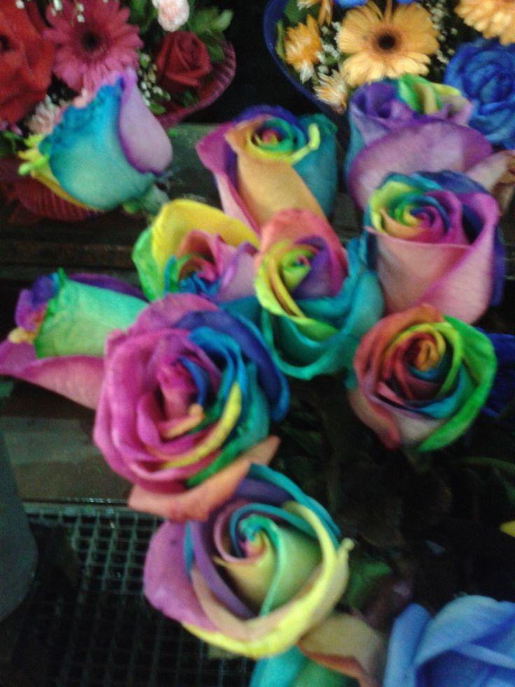 Encontré la Flor de los 7 Colores!!! (Mercado de Flores / Barrio Mapocho).