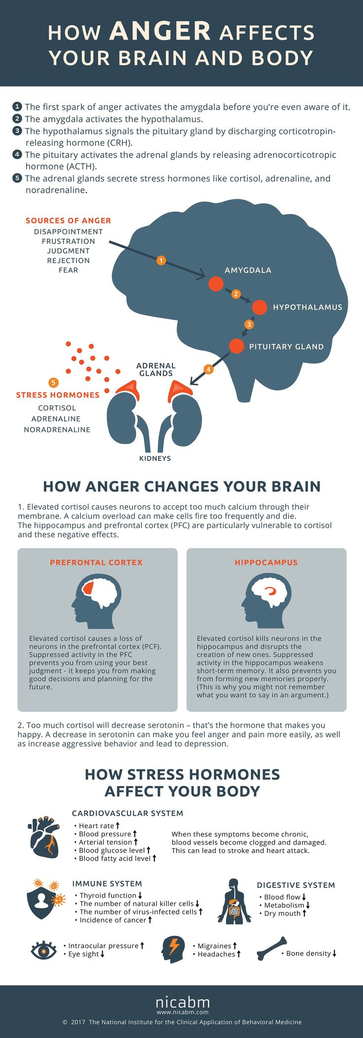 12 best human consciousness images on pinterest knowledge how anger affects your brain and body dietsforanunderactivethyroid fandeluxe Choice Image