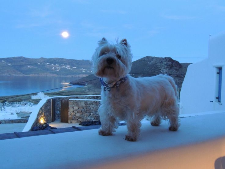 Full Moon, my boy and the sea..  www.mykonospanormosvillas.com