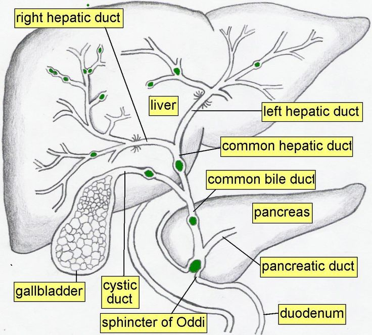 GiyabRadiology: Liver and biliary anatomy