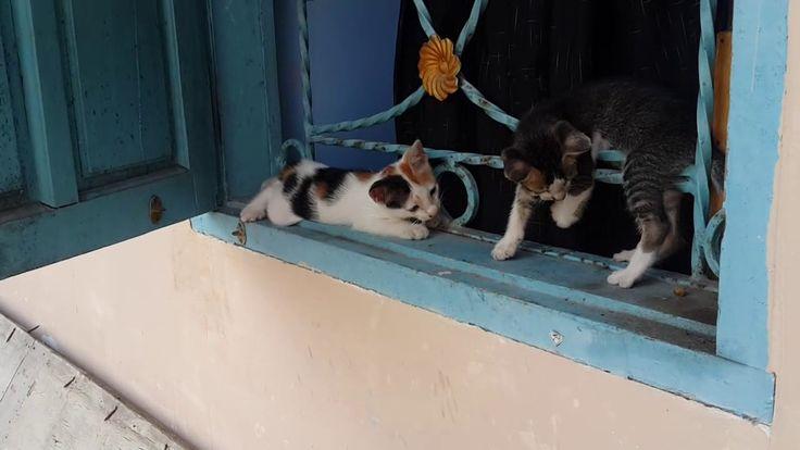 Two cute kitten playing around on a window. (Music Version) https://youtu.be/r2mKkH39aKE