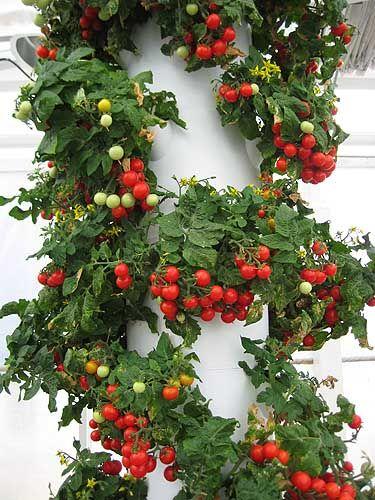 Cherry Tomato Tower Gardenu003d Way Cool