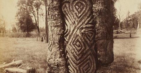 Aboriginal Carved Tree