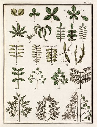 Jean Baptiste François Bulliard -- Plate IX -- Trees and Leaves -- RHS Prints