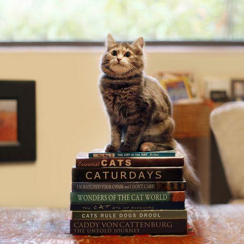 educated cat - photo #9