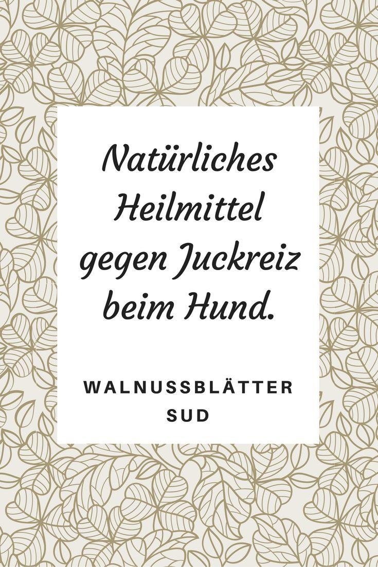 Super Tipp für ein natürliches Heilmittel gegen Juckreiz beim Hund: Walnussblätter Sud.