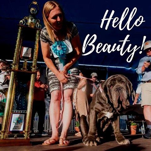 Beauty is in the eye of the beholder! Congratulations to Shirley and Martha a Neapolitan Mastiff whom won this years Worlds Ugliest Dog Contest in Petaluma, CA. We think you are beautiful Martha!! ❤️ #worldsugliestdog #martha #neopolitanmastiff #saltsox #dogsofinstagram http://misstagram.com/ipost/1545786007672342775/?code=BVzvC8eFEj3