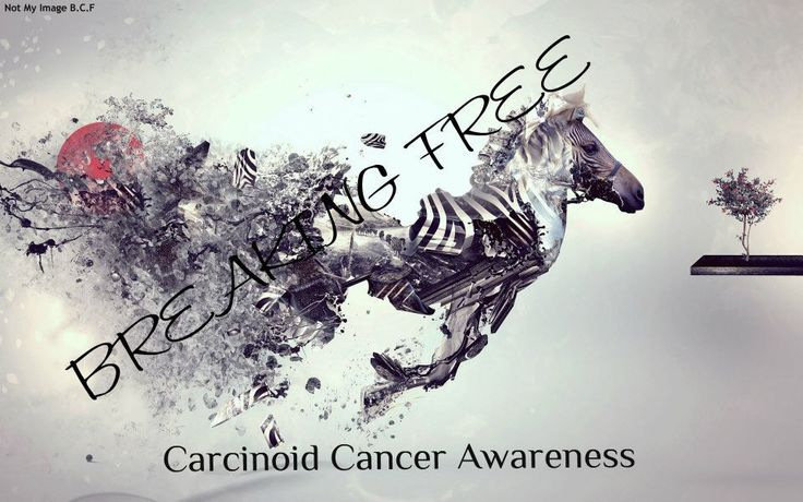 Carcinoid (NETs) Cancer Awareness: The Zebra is the symbol for Carcinoid Cancer