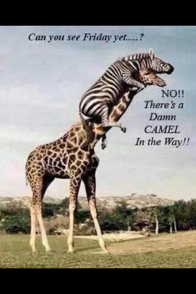 Hump day humor