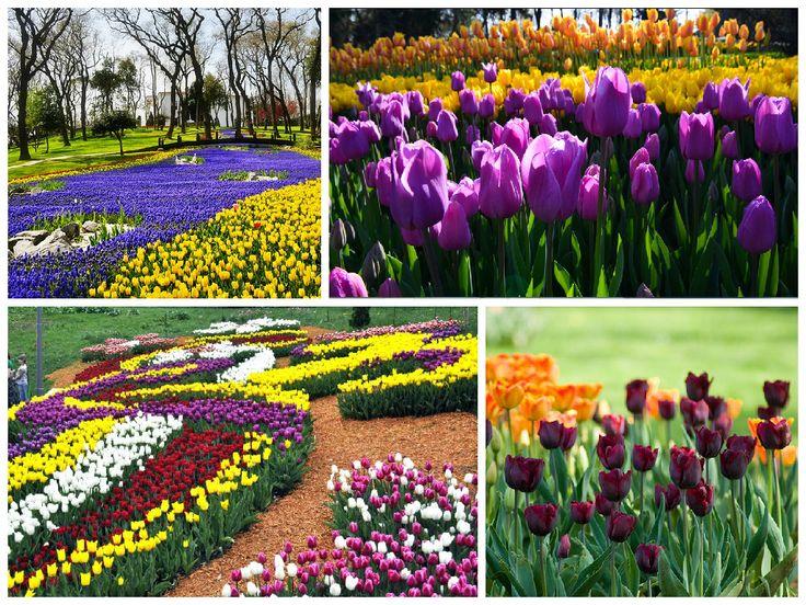 Фестиваль тюльпанов в Стамбуле - праздник цветов