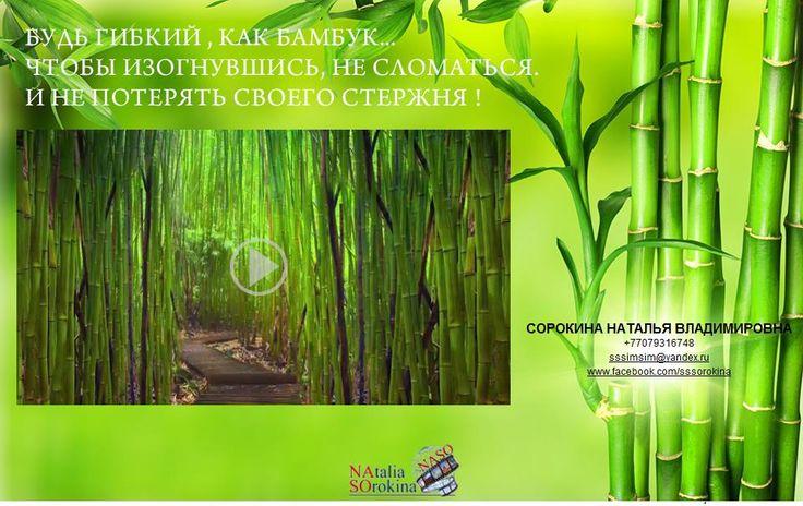 10 Фактов, которые Вы не знали о бамбуке... Смотрите видео: