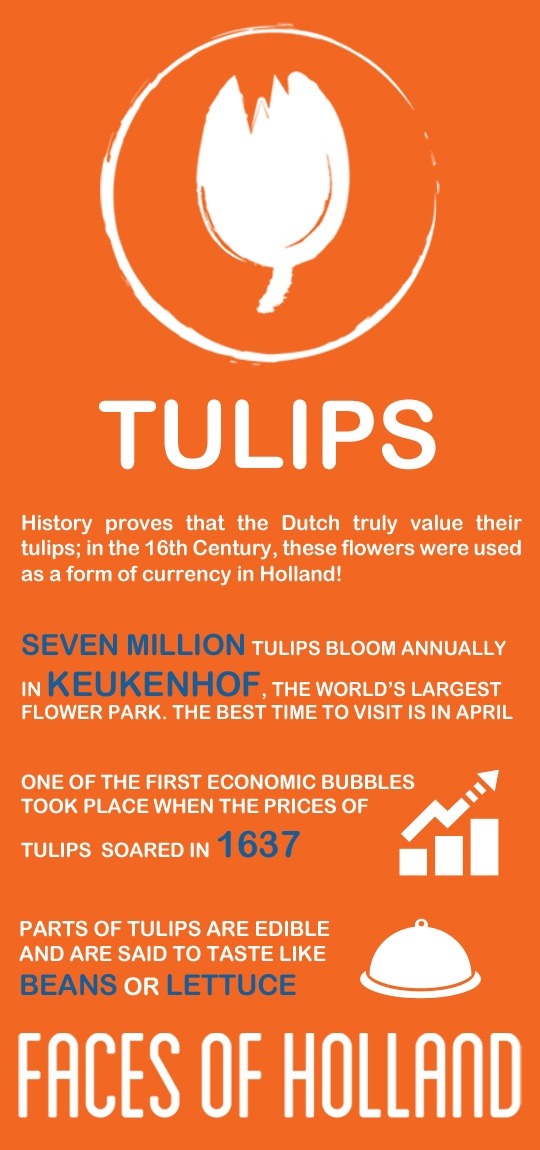 Meet the tulips, one of the six Faces of Holland. With seven million bulbs and counting, admiration for the tulip knows no bounds: http://www.holland.com/us/Tourism/Interests/faces-of-holland/tulips-2.htm