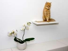 Rustic Cat Furniture : eco-friendly cat furniture