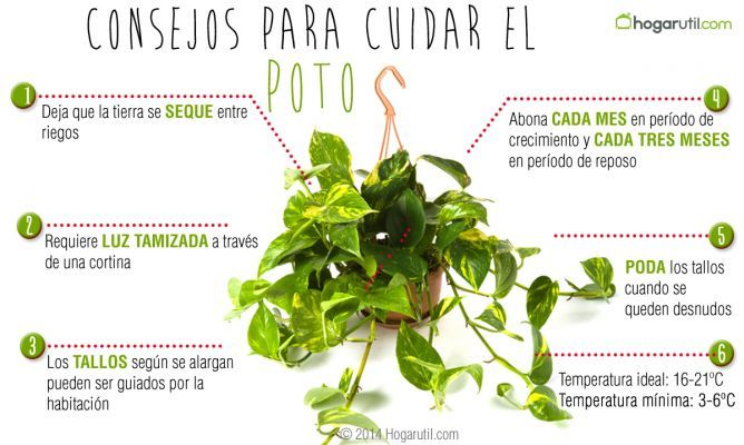 20 best images about plantas para el jardin on pinterest salud cooking and health - Hedera helix cuidados ...