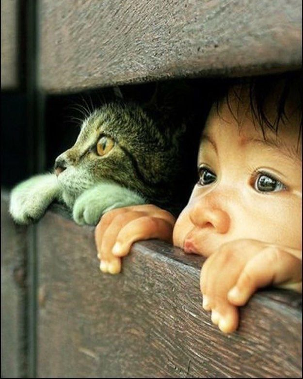 Looking out. Kid & cat.  #kid #kids #cat #cats #animals #eyes #children