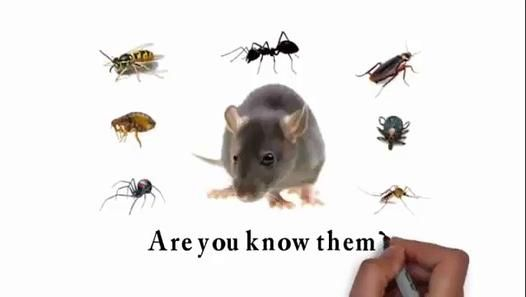 If you're experiencing problems with pests, or if you want to give your premises protection against future   http://thirstypestcontrol.com.au/