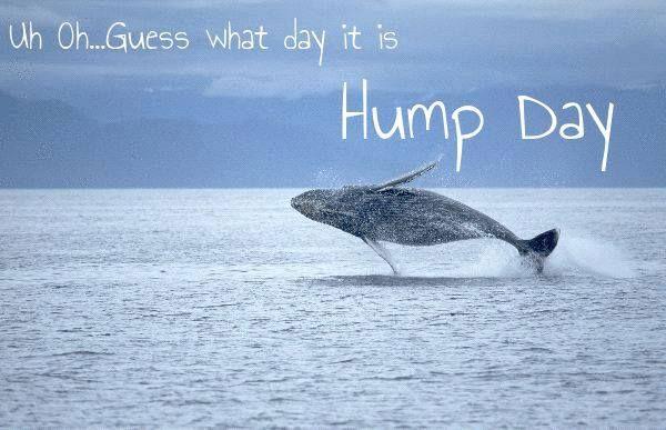 Happy Wednesday coastal lovers ~ Wednesday Pinterest