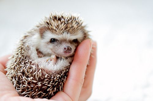 The hedgehog hand hold. I'm moving to someplace where I can get them because they're too darn cute.
