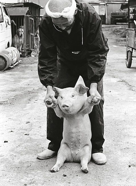 by Toshiteru Yamaji. He did a 10 year photo essay about the relationship between a piglet and the pig farmer.