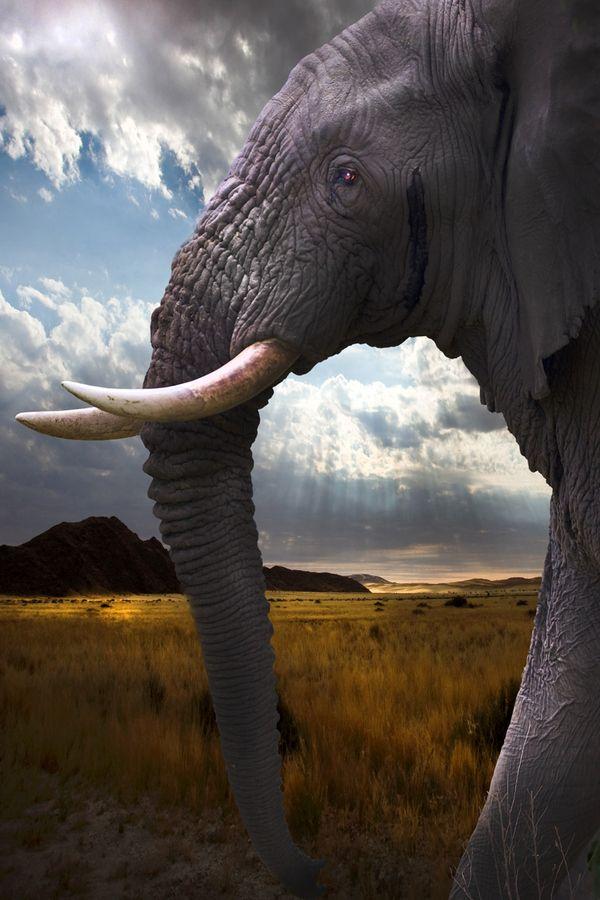 ~~walking alongside the big boys | majestic elephant portrait | by David Hobcote~~