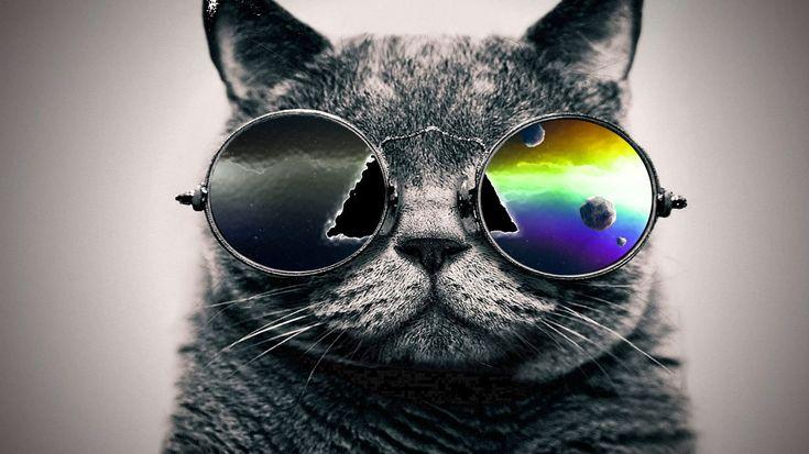 Cool Cat ♥