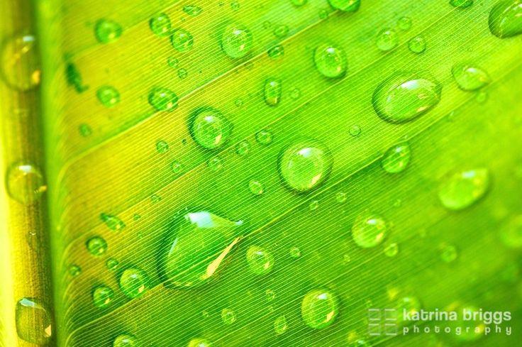Banana leaf. Bronte, Australia