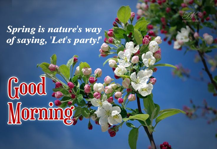 Spring is nature's way of saying, 'Let's party! #goodmorning #quotes