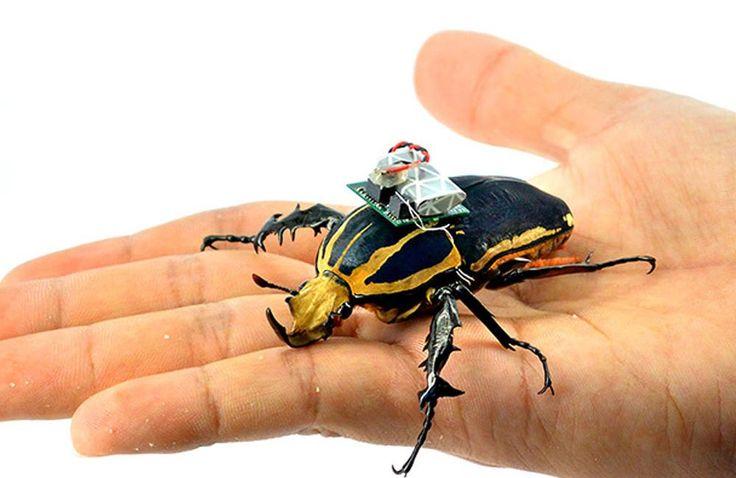Bilimin son mucizesi biyolojik robotlar