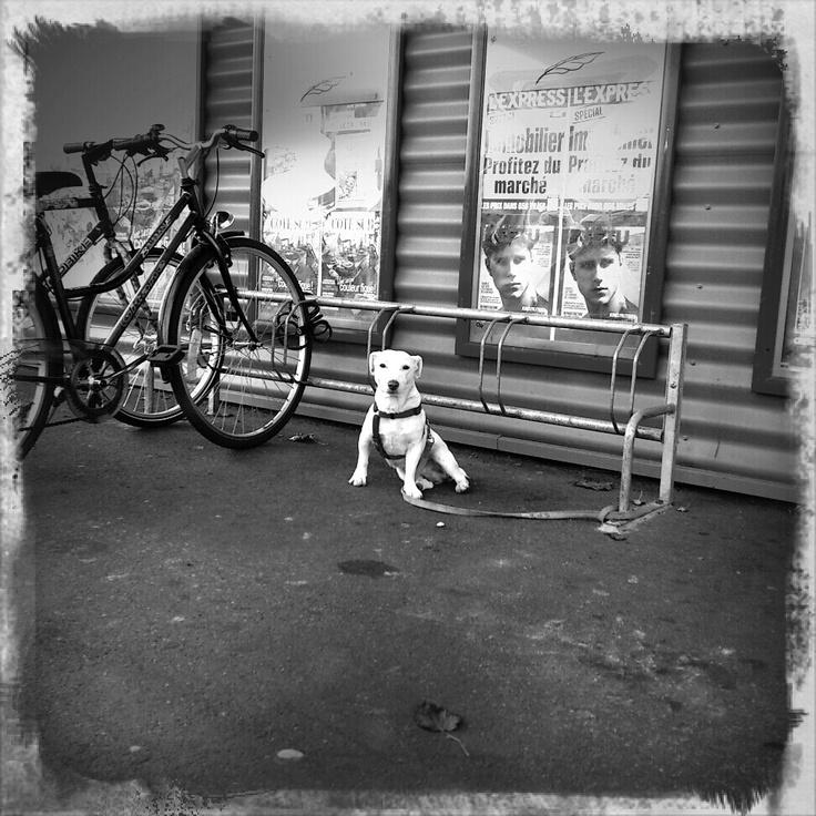 Little guard