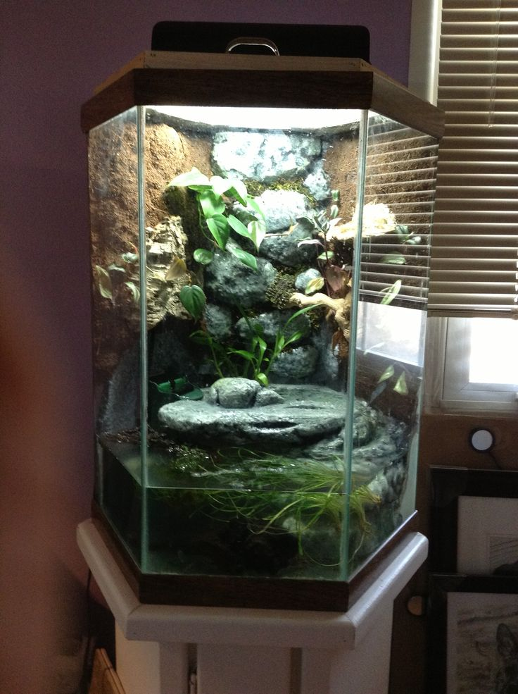 8 Best Images About Animal Tanks On Pinterest