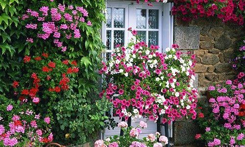 Ζέστη: Πως θα προστατέψετε τον κήπο σας