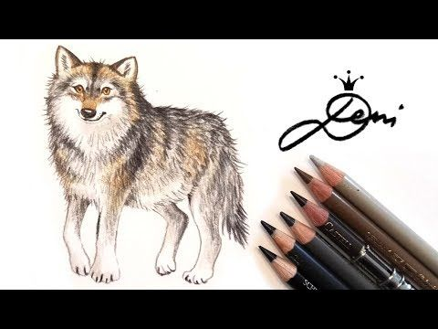 Wolf zeichnen lernen Wolfzeichnung How to draw a Wolf? Kак се рисува вълк? - YouTube