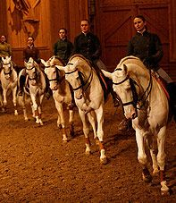 Equestrian Show Academy - Palace of Versailles